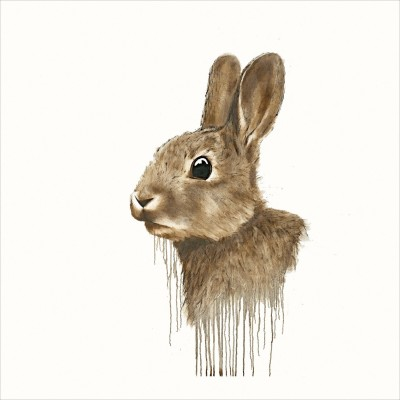 Cotton Tail image