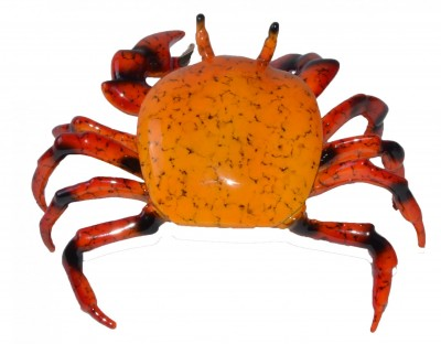 Fiddler Crab, Orange | Brian Arthur image