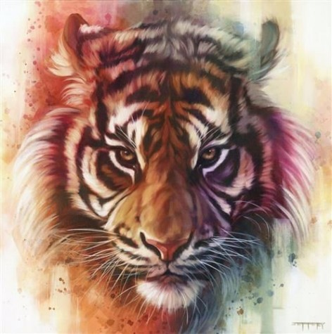 Eye Of The Tiger image
