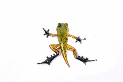 Froglet - Artist Proof | Frogman Tim Cotterill image